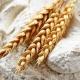 تحلیل بازار آرد در آینده